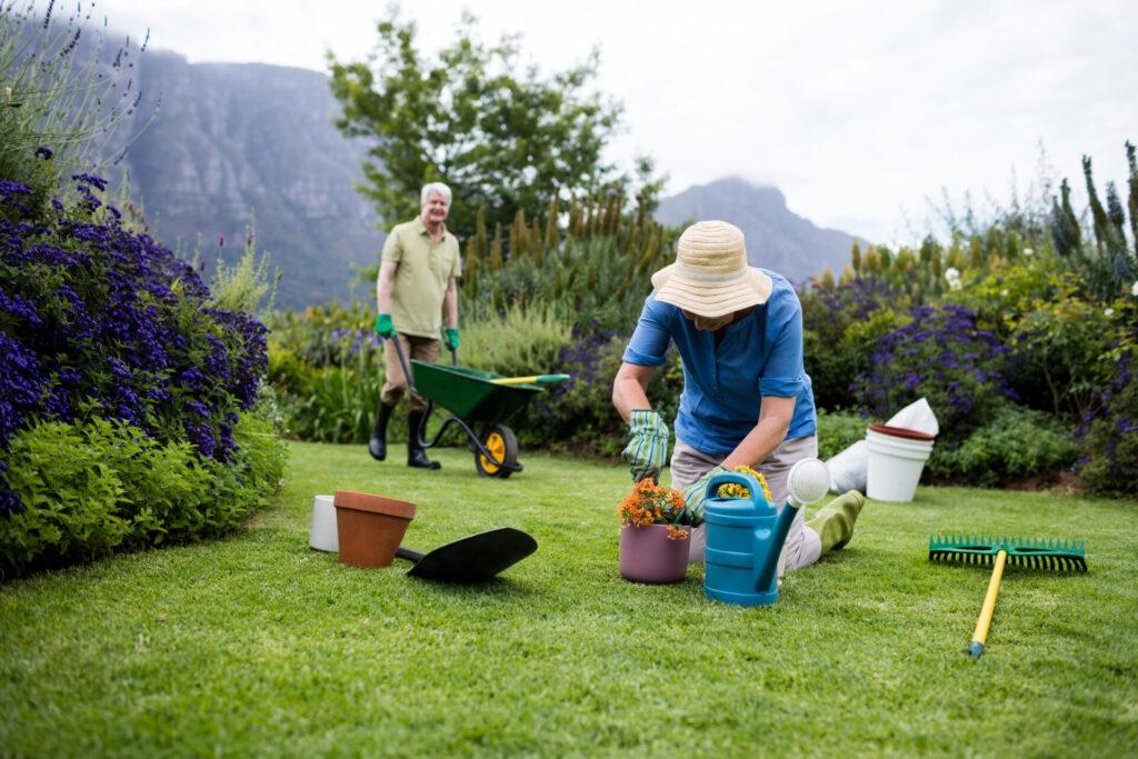 Jesienne porządki w ogrodzie 1
